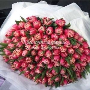 Букет из 101 бело-розового пионовидного тюльпана