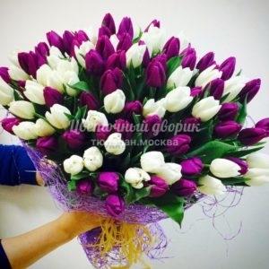 Букет бело-лиловый из 101 тюльпана
