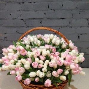Корзина из 301 белого и розового тюльпана