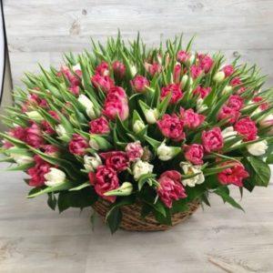 Корзина с пионовидными тюльпанами (101 шт.)